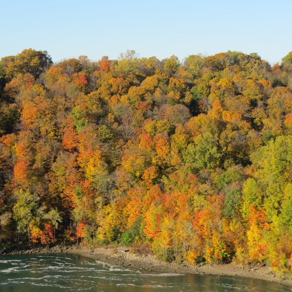 Fall colours of the Niagara Gorge. Photo by Raymond Miller.